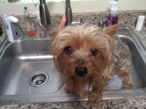 Are you SURE I need a bath?