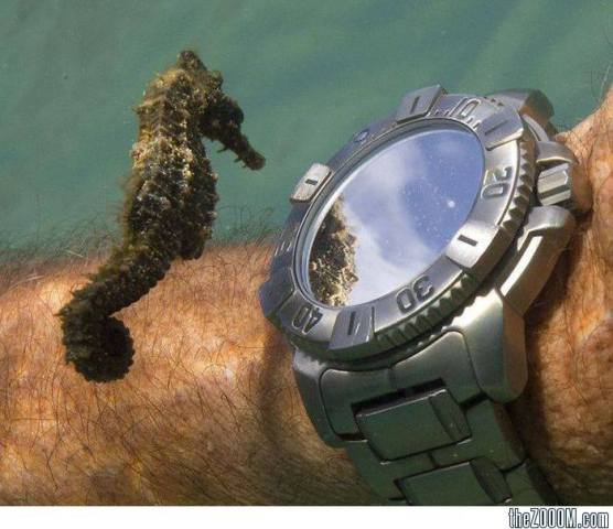 Seahorse Looking at Diver's Watch (Photo via Unusual Facts)