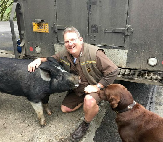UPS driver with pig