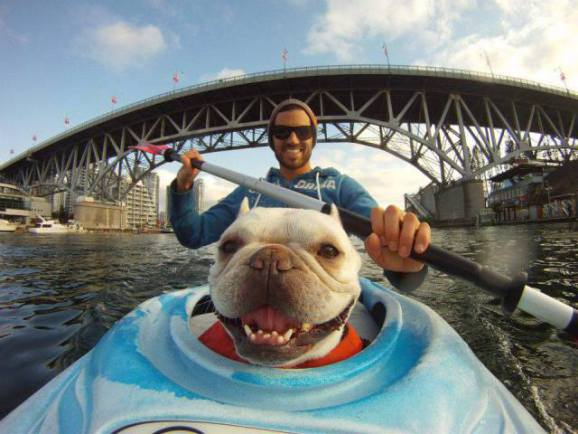 Kayaking Dog (Image via ViralNova)