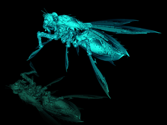 Waiting by Kim: An x-ray with a reflection, this vibrant fly art is one of my favorites by Kim