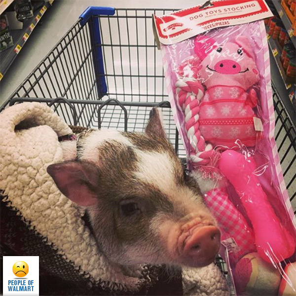 People Of Walmart's 8 Cutest Pets