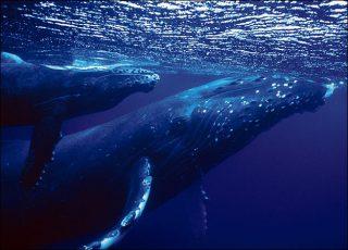Whale watching: image via animal.discovery.com