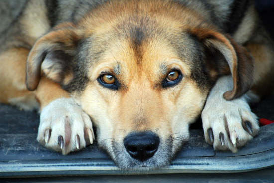 Canine Body Language: Dog depression, your pet is capable of deeper emotions than you might think