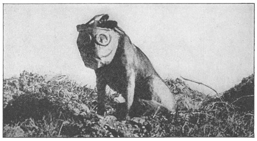 Dog wearing a gas mask during WW! (Public Domain Image)