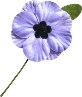 Purple Poppy from Animal Aid
