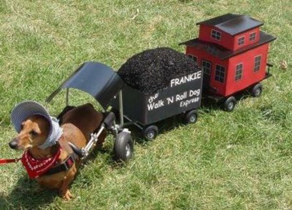 Dachshund Train