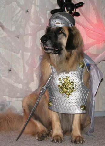 As the first dog to be knighted by the Queen, I take my responsibilities very seriously.: Knighted Dog Costume, image via Doggibling.com