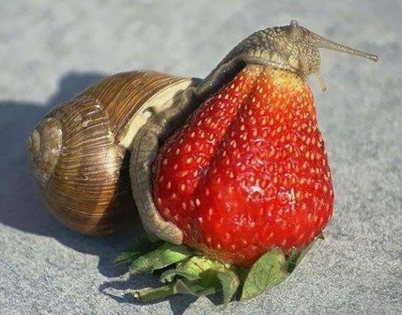 Snacking Snail (Image via eBaum's World)