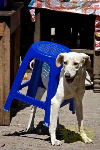 Dog Stool (Image via BuzzFeed)
