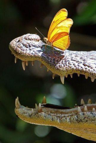 Alligator and Friend (Image via tumblr)