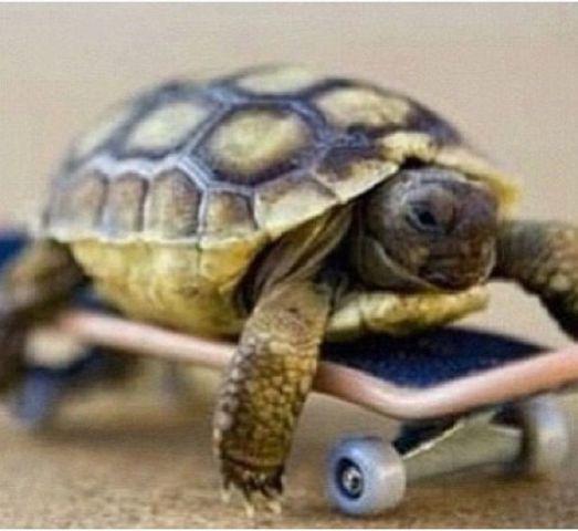 Skateboarding Turtle (Image via Pinterest)