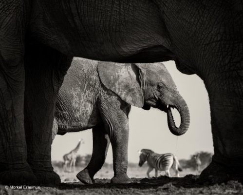 Natural Frame: photo by Morkel Erasmus/Wildlife Photographer of the Year 2015