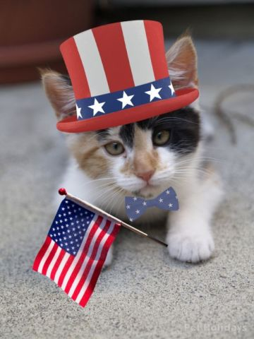 Independence Day Kitty (Image via PRWeb)