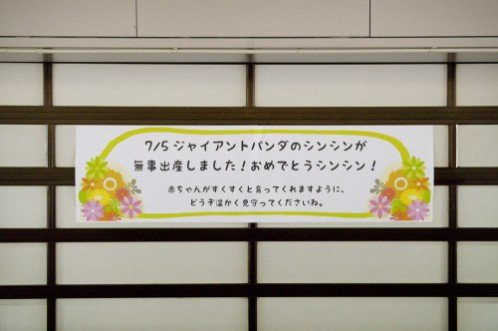 Giant Panda birth announcement at Tokyo's Ueno Zoo: image via giantpandazoo.com