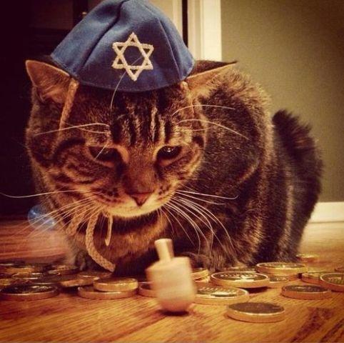 Dreidel Cat
