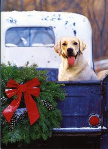 Country Christmas Dog