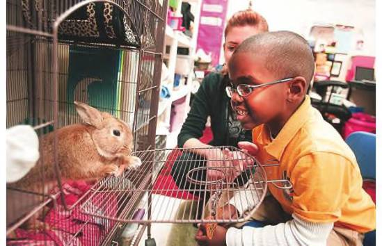 Student in Ohio elementary school looks in on his class's new rabbit: image via thisweeknews.com