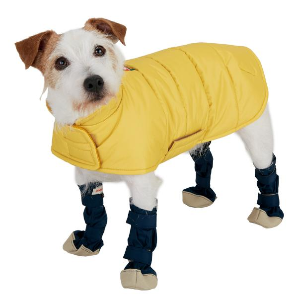 Doggie Disaster Boots Help Poodles Plod Through Puddles