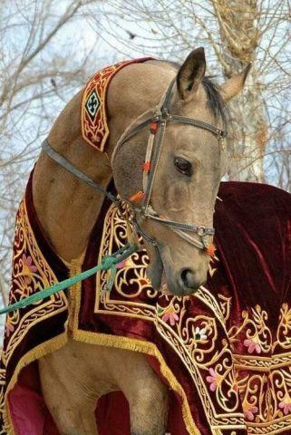 Handsome Horse (Image via tumblr)