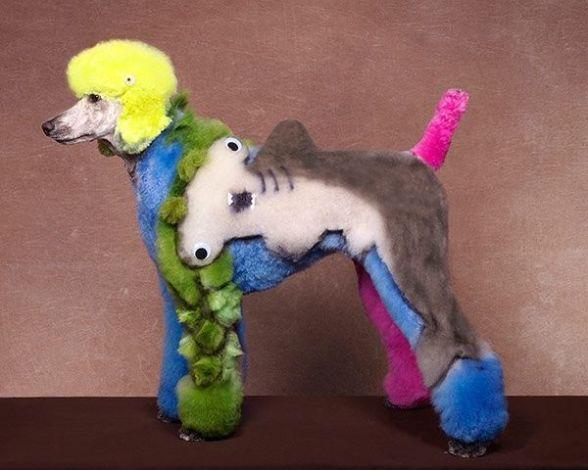 Hammerhead Poodle (Image via The Guardian)