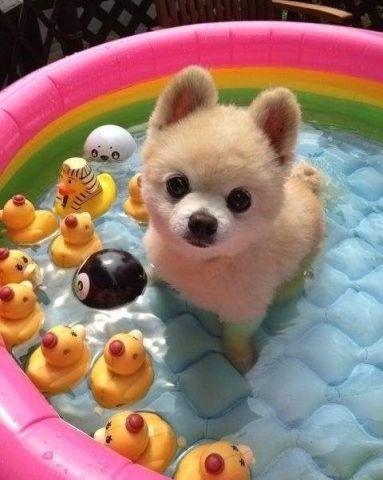 Summer Dog (Image via BuzzFeed)