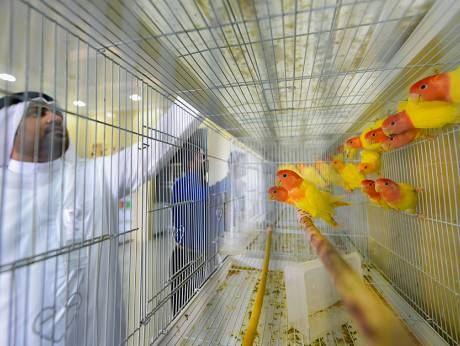 Glimpse of a bird store in the new Dubai Pet Market