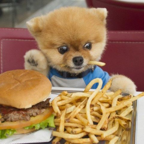 Jiff and his Burger and Fries (Image via Pics Door)