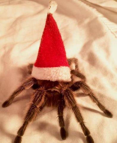 Creepy Santa Spider (Image via Parade Magazine)