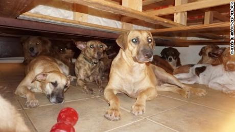 Bahamian 'Clara Barton' Saves 97 Dogs From Wrath Of Dorian