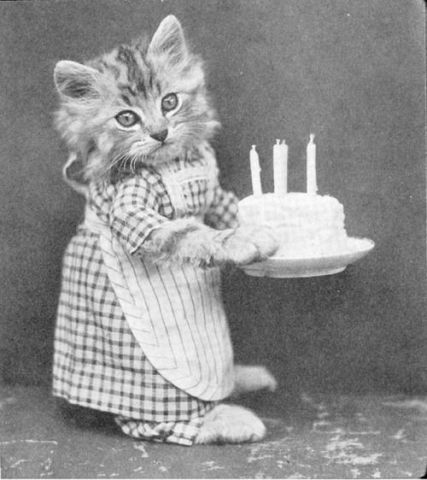 Birthday Cat (Image via Buzzfeed)