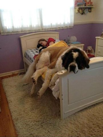 Dog Nap (Image via BuzzFeed)