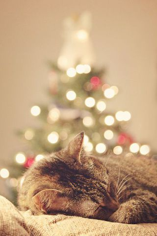 Christmas Cat Nap (Image via tumblr)