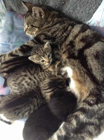 Mama Cat and her Kittens (Image via HNGN)