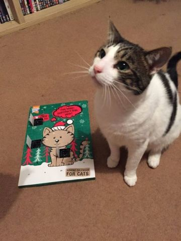 Ted and His Advent Calendar