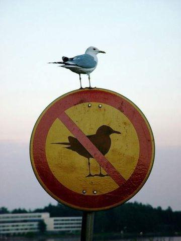 Rebel Seagull (Image via We Heart It)