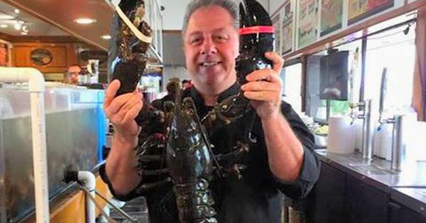 132-Year-Old Louie the Lobster Returns To The Sea