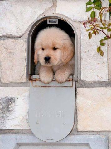Mail Puppy