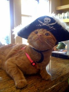 Wilma, 3-legged pirate cat, one of 13 Ravishing Rescues from the 2012 Calendar: image via 360photocontest.com