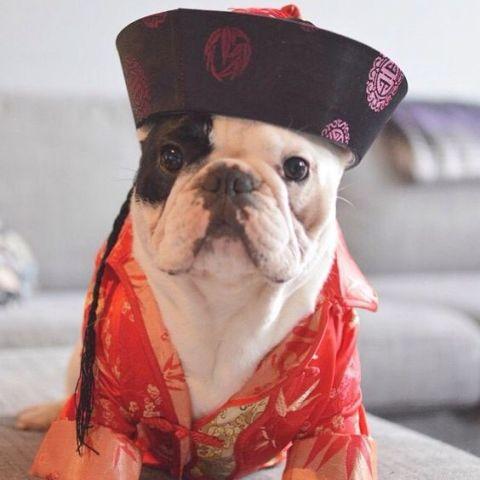 Chinese Bulldog