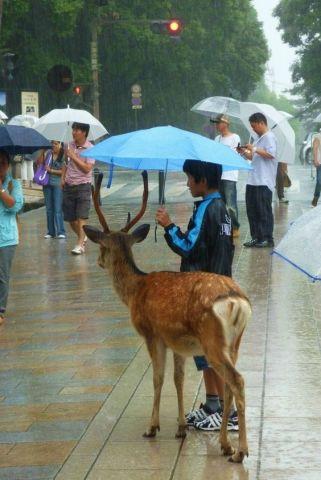 Umbrella Deer