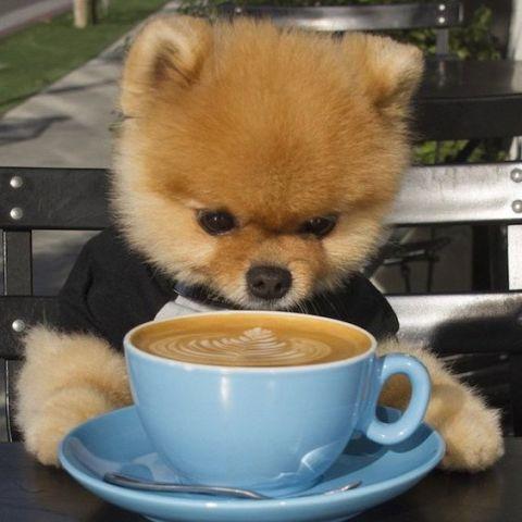 Jiff, the Coffee Dog
