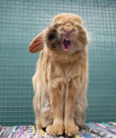 Singing Bunny (Image via BuzzFeed)