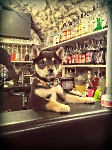 Bartending Dog
