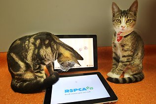 Affection Collection, new cat app for iPad: image by Annette Dew via news.com.au