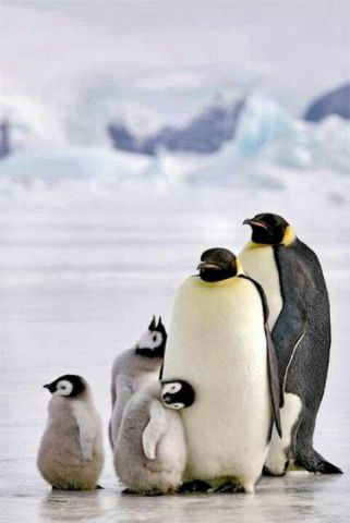 Penguin Family Photo