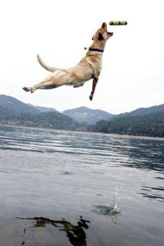 Air-Diving Dog