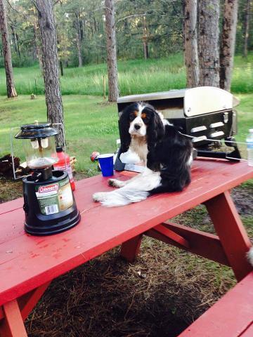Picnic Dog (Image via Jennifer Herman)