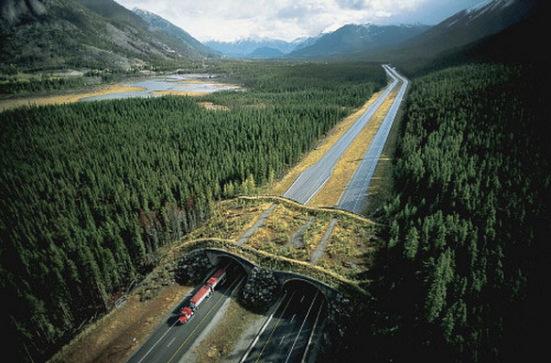 Wildlife overpass, Banff National Park, Alberta, Canada: Parks Canada via theworldgeography.com