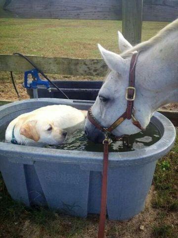 Funny Water Dispute